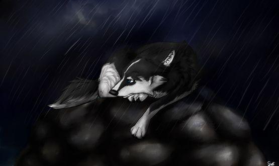 Обои Черно-белый пес лежит на груде камней под проливным дождем
