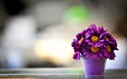 Обои Букет фиолетовых цветов, стоящий на поверхности, на размытом фоне
