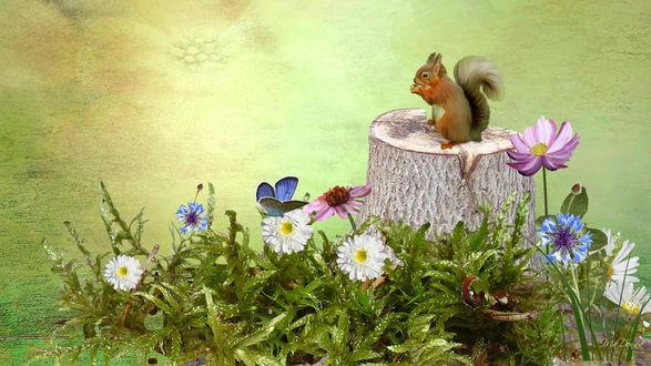 Обои Белочка сидит на пеньке среди растущих цветов, рядом с которыми летает бабочка