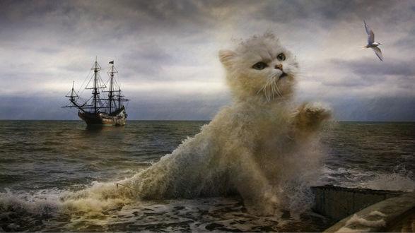 Обои Из морской волны образовался образ кота, который тянется за парящей в небе птицей, вдали плывет корабль
