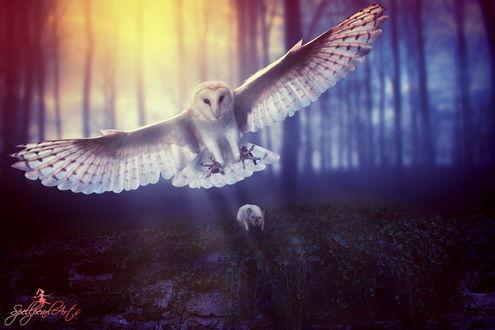 Обои Огромная, белая, полярная сова, парящая с растопыренными когтями над каменной стеной, покрытой листьями с сидевшим на ней и сжавшимся от страха белым мышонком на фоне заката на опушке леса, автор SpellpearlArts