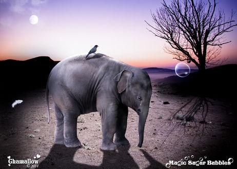 Обои На спине у плачущего слоненка сидит птичка, рядом летает перышко и мыльный пузырь, by MaGic-SuGar-BubbleS