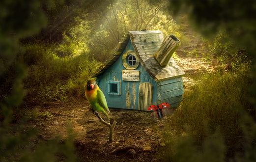 Обои Попугай сидит на веточке около дереянного маленького домика с надписью Home, sweet home / Дом, милый дом