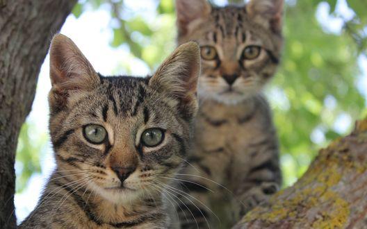Обои Полосатые котята сидят на дереве