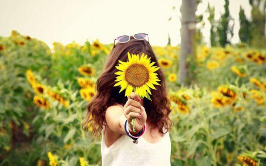 Обои Девушка стоя среди подсолнухов выставила руку, закрыв при этом свое лицо цветком подсолнуха