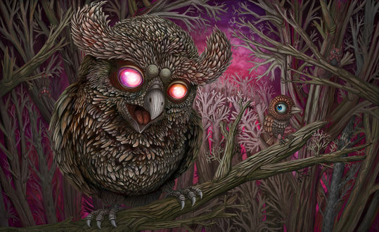 Обои Прикольная сова со светящимися глазами, сидит на ветке дерева со своим детенышем птенцом