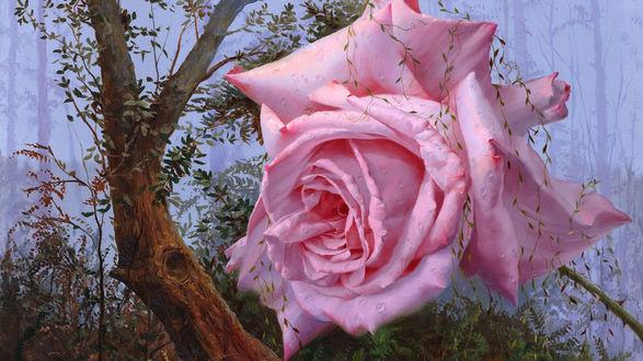 Обои Розовая роза в каплях воды, увитая плющом, на фоне леса