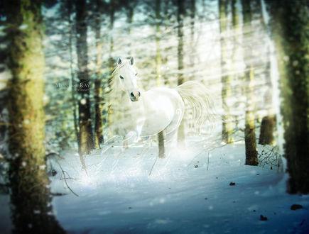 Обои Белая лошадь в зимнем лесу, by purpledaydreams