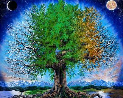 Обои Четыре времени года на дереве и земле :лето, осень, зима и весна