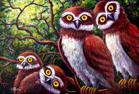 Обои Четыре совы смотрят под разным ракурсом, художник S. Pierre