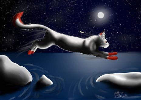 Обои Кошка с красным концом на хвосте и красными лапками прыгает с камня на камень