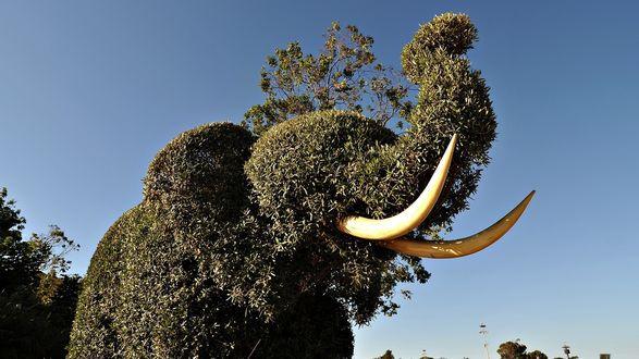 Обои Зеленое насаждение в виде слона с поднятым хоботом и бивнями