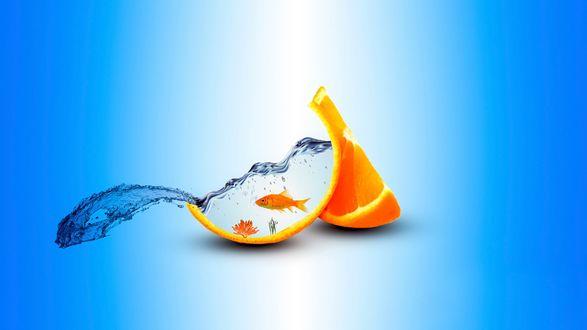 Обои Долька разрезанного апельсина, с выплескивающейся водой, в которой плавает золотая рыбка, растут водоросли и растет коралл