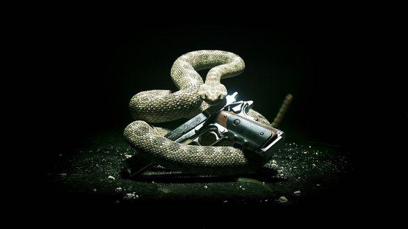 Обои Змея с пистолетом