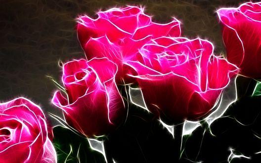 Обои Розовые розы, оригинальное изображение