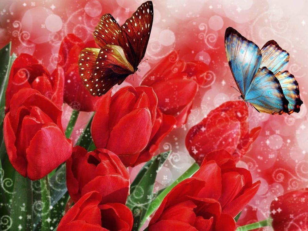 Бабочка для поздравления, вспоминай
