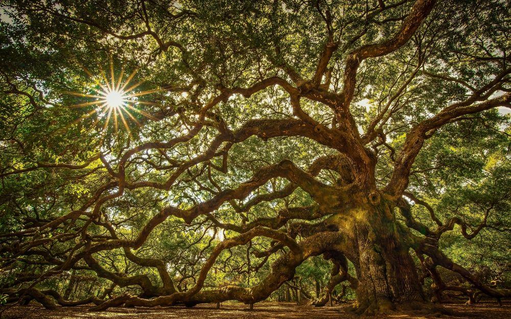 разросшееся дерево