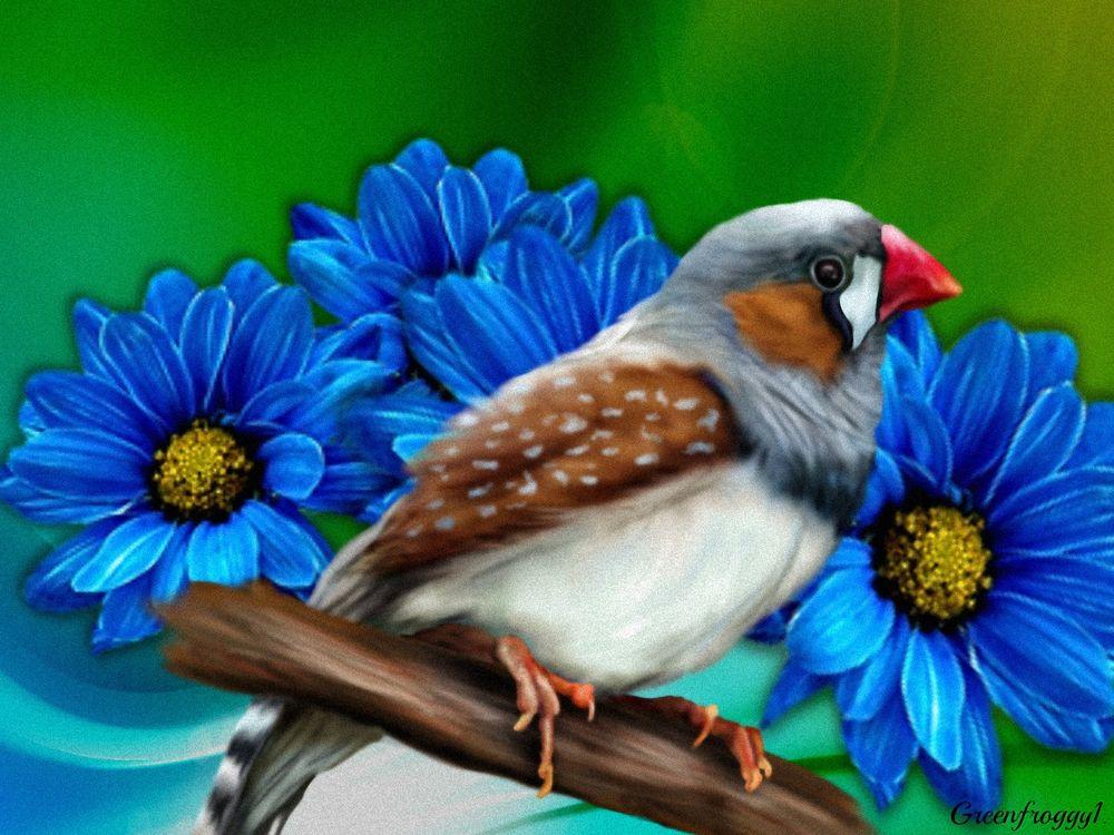 птицы с красным клювом