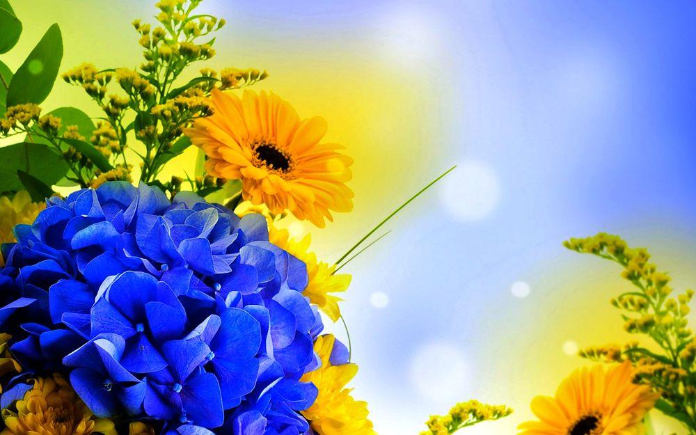 Картинки на рабочий стол лето июль август цветы