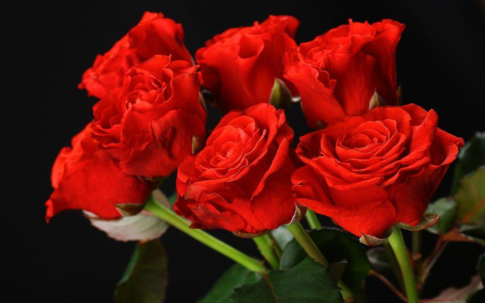 Букет красных роз на рабочий
