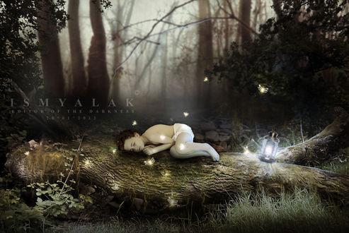 Обои Маленький мальчик спит в лесу на лежащем стволе дерева, возле него стоит горящий светильник и летают сияющие насекомые (IS MYALAK editor of the darkness 20012013)