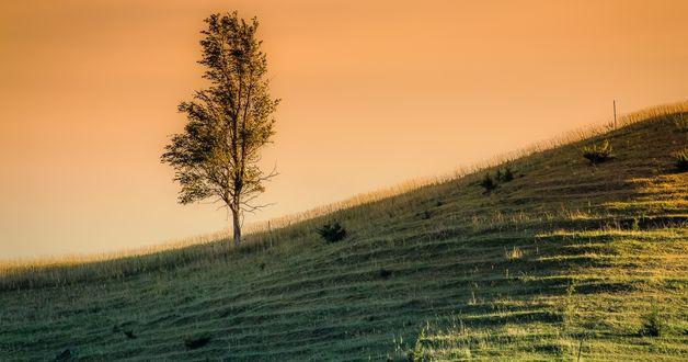 Обои Одинокое дерево, растущее на склоне холма, на фоне вечернего неба
