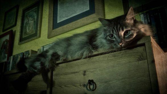 Обои Серая кошка лежит на комоде