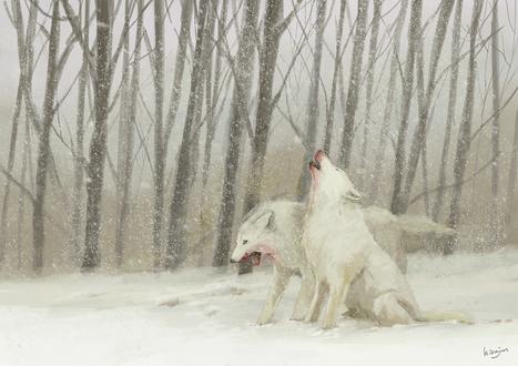 Обои Два белых волка, морды которых испачканы кровью
