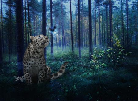 Обои Леопард, сидя в лесу на поляне, смотрит на летящую к нему бабочку, by Imperfectpureblood