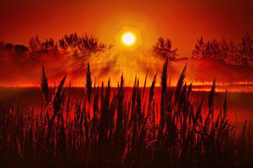 Обои Красивый закат, фотограф Phil Koch