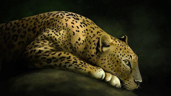 Обои Рисунок леопарда лежащего на животе и положившего голову на передние лапы