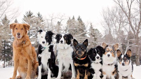 Обои Разномастные собаки сидят на снегу в ряд, рассевшись по ранжиру