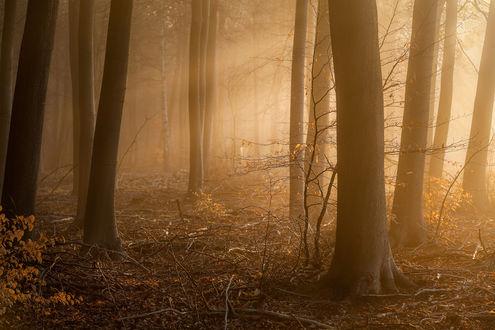 Обои Осенний лес, сквозь деревья просвечивается солнечный свет