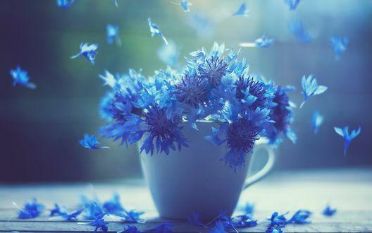 Обои Белая кружка с голубыми васильками стоящая на столе