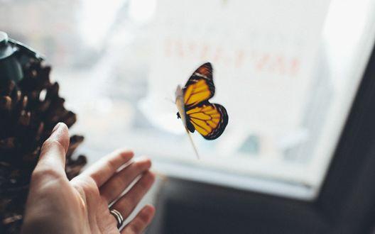 Обои Женская рука тянется к бабочке
