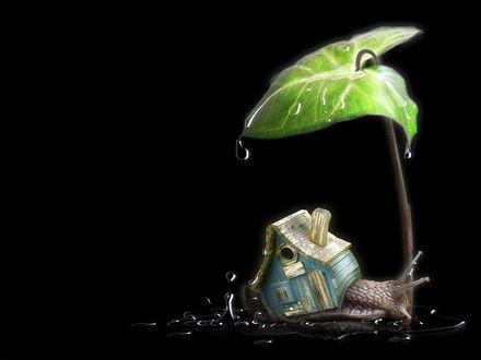 Обои Улитка с необычным домиком на спине, спряталась от дождя под крупным зеленым листом