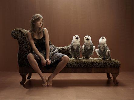 Обои Девушка сидит на диване вместе с тремя совами