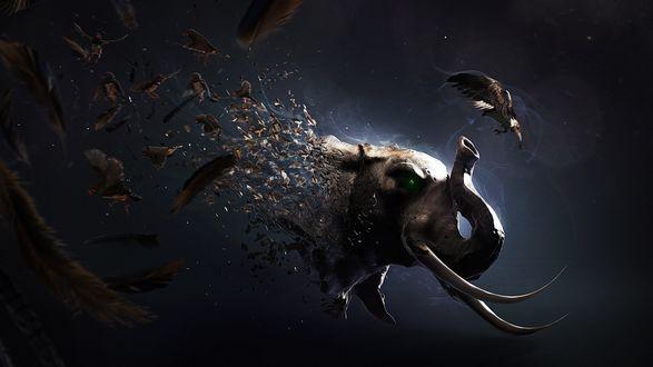 Обои Тело слона рассыпается на птиц и перья