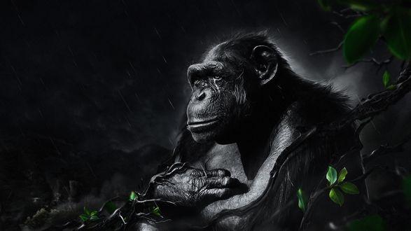 Обои Кинг-Конг / King Kong/— один из самых популярных персонажей одноименного фильма, гигантская доисторическая горилла сидит под дождем среди веток деревьев
