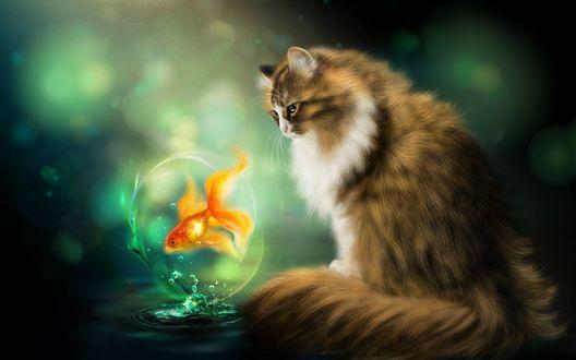 Обои Пушистый кот смотрит на золотую рыбку