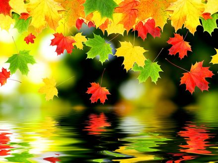 Обои Разноцветные кленовые листья над водой
