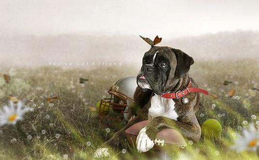 Обои На морде пса, лежащего в траве, сидит бабочка