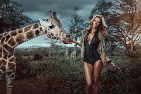 Обои Модель Вероника Климовиц / Veronika Klimovits кормит с руки жирафа