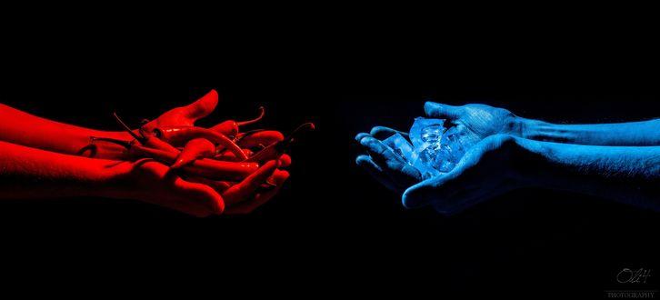 Обои Две пары рук, красная протягивает пригоршню стручков красного перца, синяя протягивает кусочки льда навстречу первой