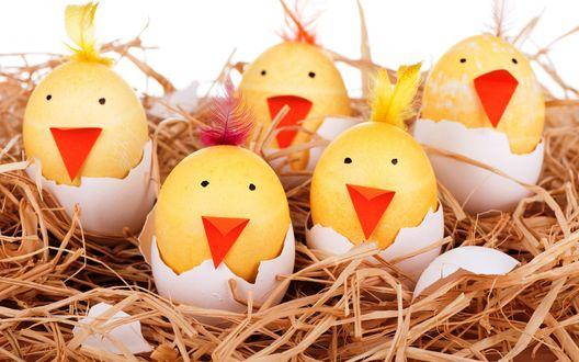 Обои Игрушки в виде скорлупы яиц, в которых сидят желтые цыплята