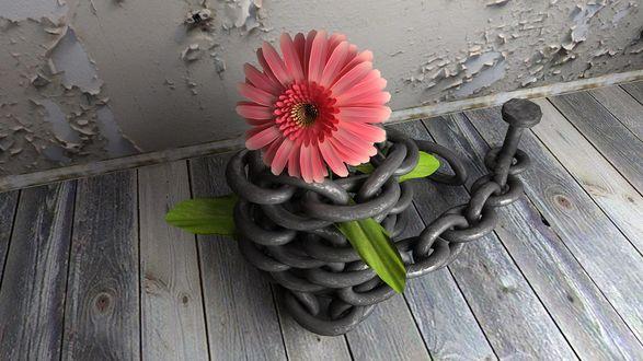 Обои В смотанной стальной цепи прибитой к деревянному настилу, вставлен розовый цветок с зелеными листьями