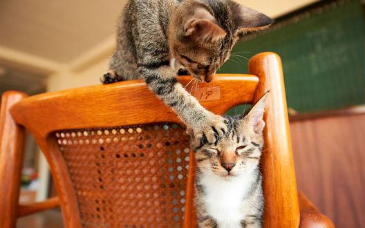 Обои Одна кошка, сидящая на спинке стула, трогает лапой за ухо другую кошку, сидящую на стуле