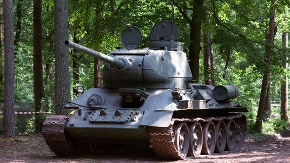 Обои Легендарная Т-34 стоит в лесу