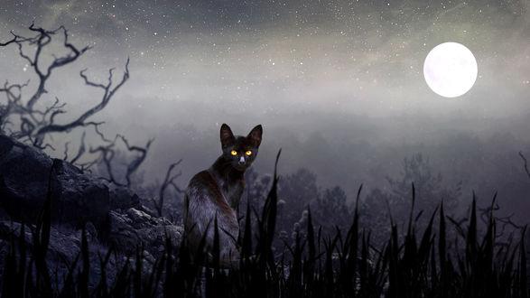 Обои Кошка с желтыми глазами сидит на фоне полной луны, by Puppet Soul