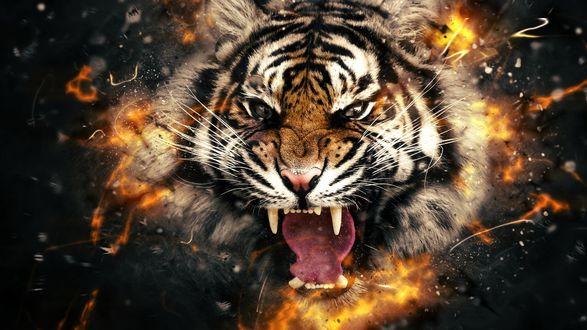Обои Голова разъяренного тигра в огне
